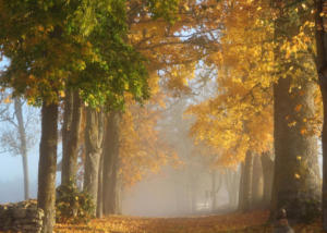 autumn-alley-visit-estonia